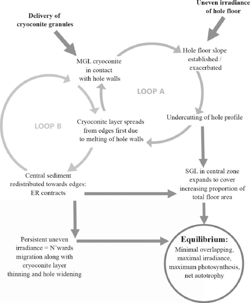 Flow Diagram Illustrating The Proposed Mechanism Of Lateral regarding Er Diagram Loop