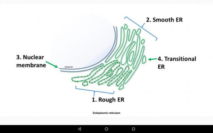 Permalink to Cell Biology-101 Для Андроид – Скачать Apk within Er Diagram 101