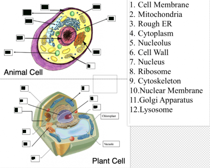 Permalink to Cell Study Guide Diagram | Quizlet throughout Er Diagram Quizlet