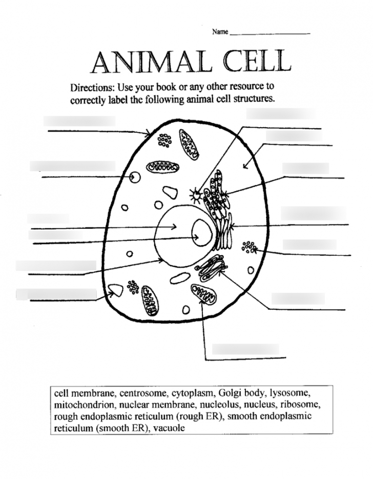 Permalink to Cells And Organelles Diagram | Quizlet with regard to Er Diagram Quizlet