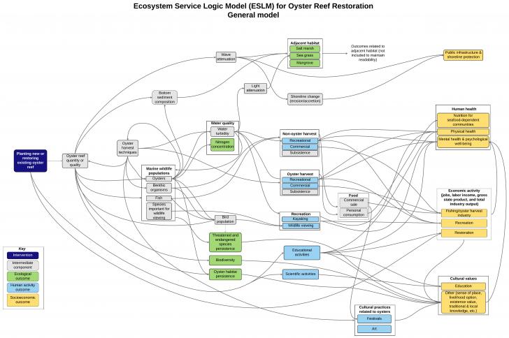 Permalink to Oyster Ecosystem Service Logic Model   The Nicholas inside Logic Model