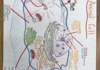 This Animal Cell Includes: #nucleus #rough Endoplasmic with regard to Endoplasmic Reticulum Drawing